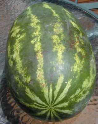 20080703025035-vampire-watermelon.jpg
