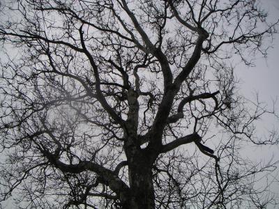 20081214151437-pa-tree.jpg