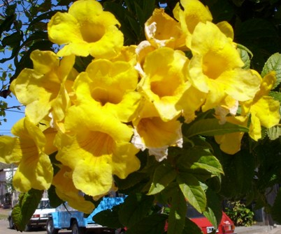 20090921154820-yellow-flowers.jpg