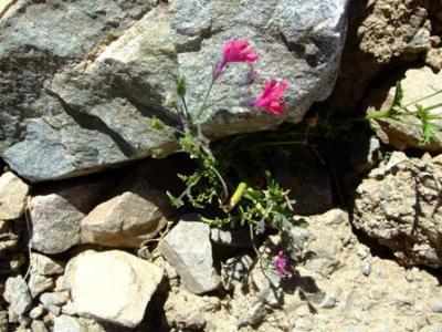 20120313234239-san-rafael-flower.jpg